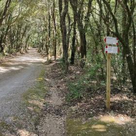 Strade e sentieri del bosco
