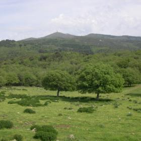 Forest'Anela, Monte Pisanu visto da Su pranu