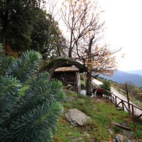 Aritzo, Euforbia cespugliosa in località Funtana'e Silia