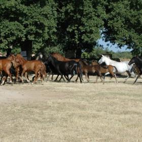 Cavalli nell'area di Su Dominariu, Laconi