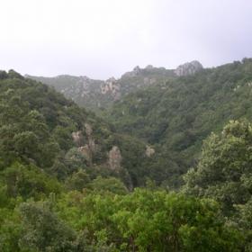 Panorama sul canale boscato