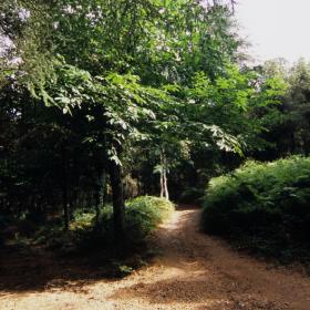 foreste demaniali