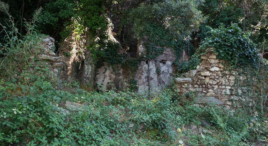 Case Reigraxius (is Acacias)