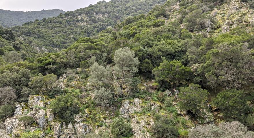 Panoramica sulla parte alta e rocciosa del percorso nella valle del rio sa Spindula