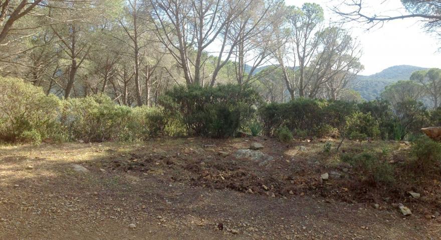 lungo il sentiero 200 (un tratto sottobosco, vecchia pineta)