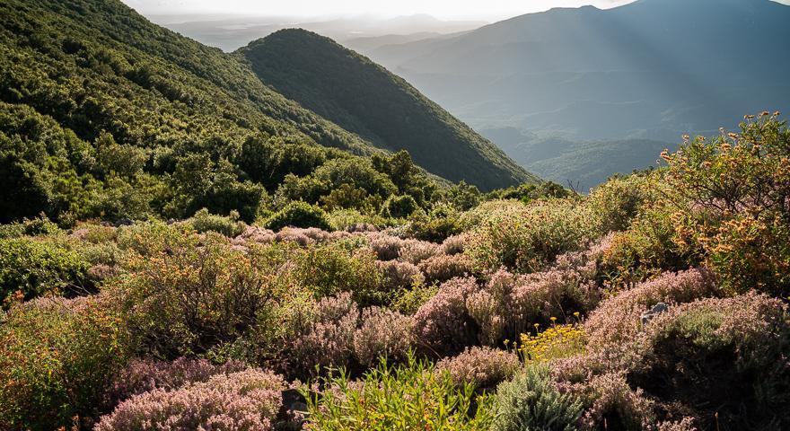 La cresta sotto Monte Maxia