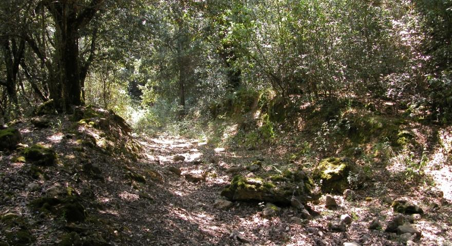 Carareccia in foresta Cannas, Sadali