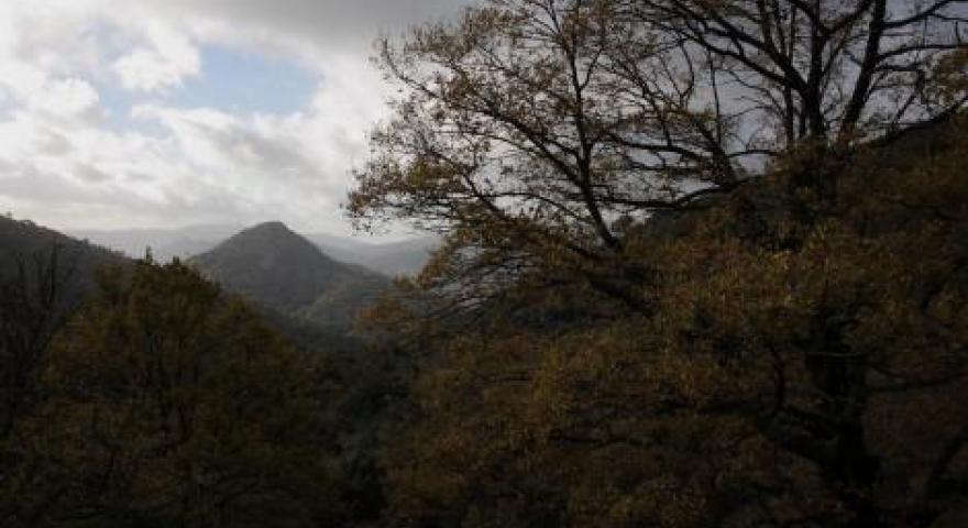 Girgini Foresta