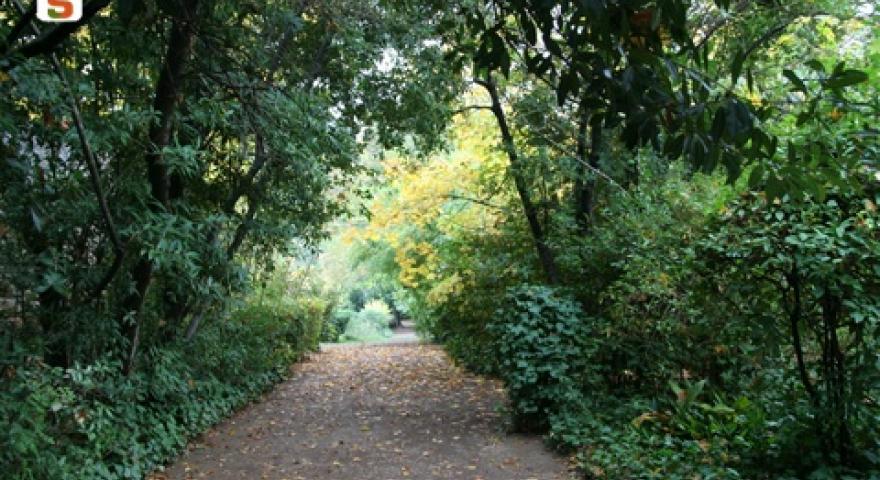 Laconi  vialetto nel parco Aymerich