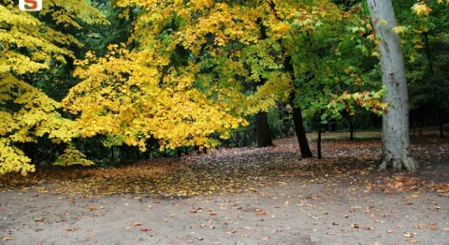 Laconi, acero nel parco Aymerich