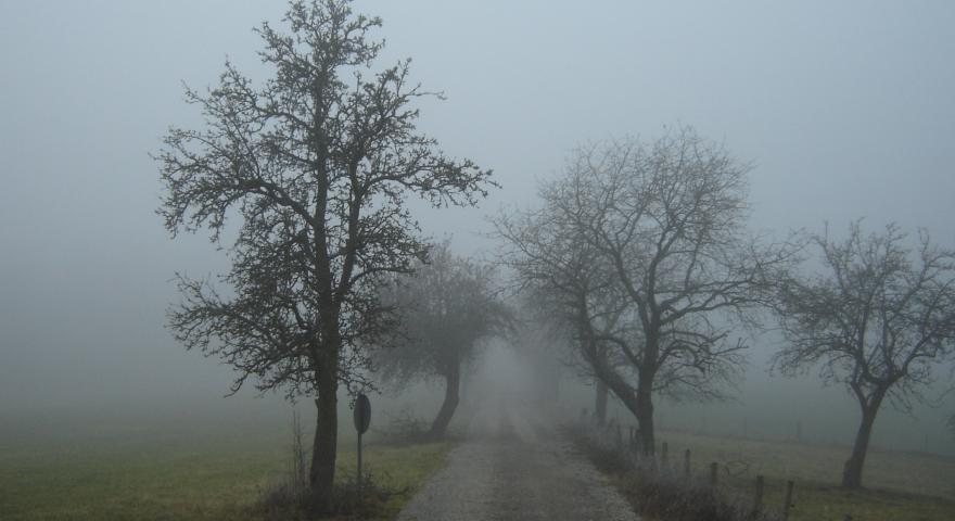 immagine della nebbia in campagna