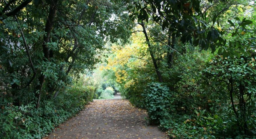 Laconi, vialetto nel Parco Aymerich