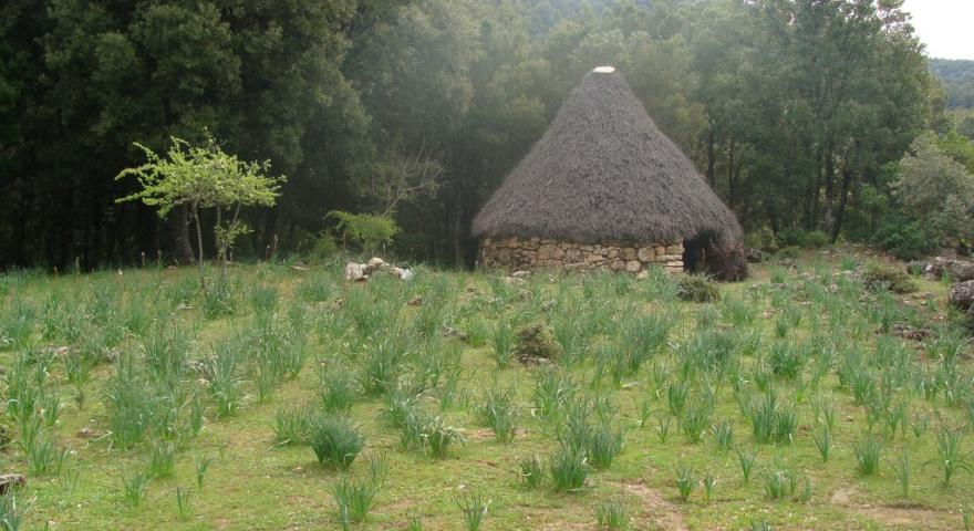 Ussassai, pinnettos nei pressi di Niala