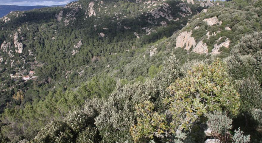 Su Monte Orthobene, panoramica verso l'Ortobene