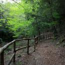 Foresta di Montarbu, sentiero T-112 lungo il rio Ermolinos
