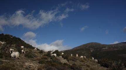 Desulo, foresta di Girgini