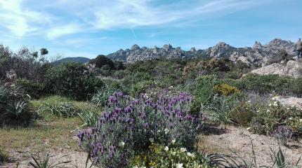 Panorama in località Acqueddas, sentiero 800 B